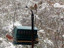 Pájaro en el alimentador con nieve Foto de archivo