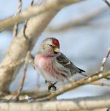 Pájaro en el branc. Fotos de archivo