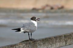 Pájaro en el carril Imagen de archivo