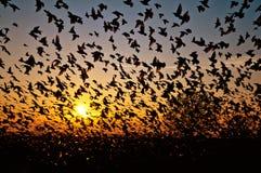 Pájaro en el cielo Foto de archivo libre de regalías