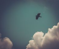 Pájaro en el cielo imagen de archivo libre de regalías