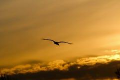 Pájaro en el cielo de la puesta del sol foto de archivo libre de regalías