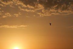 Pájaro en el cielo de la tarde Imágenes de archivo libres de regalías
