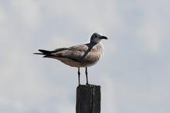 Pájaro en el embarcadero Imagen de archivo libre de regalías
