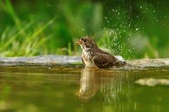 Pájaro en el lago Fotografía de archivo