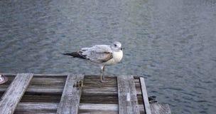 Pájaro en el muelle Foto de archivo libre de regalías