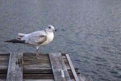 Pájaro en el muelle Imagen de archivo libre de regalías