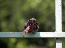 Pájaro en el parque público Fotografía de archivo