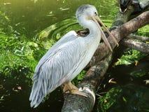 Pájaro en el parque zoológico en Zagreb fotos de archivo