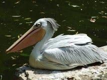 Pájaro en el parque zoológico en Zagreb fotografía de archivo libre de regalías