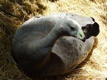 Pájaro en el parque zoológico en Zagreb imagen de archivo