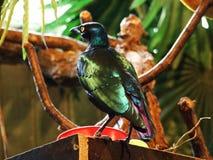 Pájaro en el parque zoológico en Zagreb imagen de archivo libre de regalías