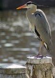 Pájaro en el poste Fotos de archivo