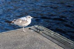 Pájaro en el puerto Imagen de archivo libre de regalías