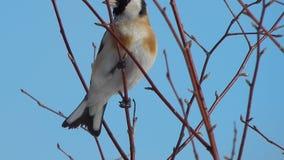 Pájaro en el salvaje almacen de video