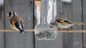 Pájaro en el salvaje almacen de metraje de vídeo