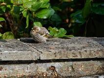 Pájaro en el sol foto de archivo