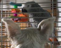 Pájaro en el suyo vistas Fotografía de archivo libre de regalías