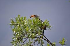 Pájaro en el top del árbol Foto de archivo