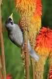Pájaro en el tronco de la planta Fotografía de archivo libre de regalías