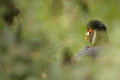 Pájaro en hierba verde Fotografía de archivo