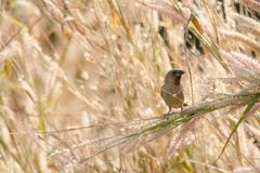Pájaro en jardín Fotos de archivo libres de regalías