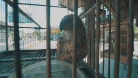 Pájaro en jaula