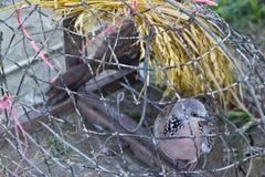 Pájaro en jaula Fotografía de archivo