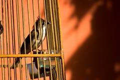 Pájaro en jaula Imagen de archivo libre de regalías