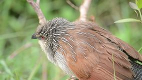 Pájaro en Kenia almacen de video