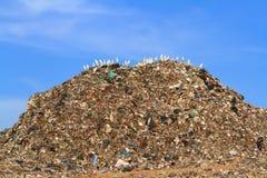 Pájaro en la basura fotos de archivo