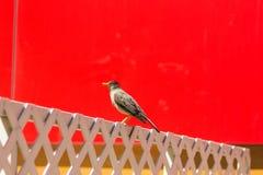 Pájaro en la ciudad Fotografía de archivo libre de regalías