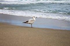 Pájaro en la costa Imágenes de archivo libres de regalías