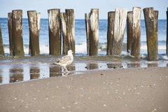 Pájaro en la costa atlántica fotografía de archivo