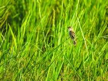 Pájaro en la hierba foto de archivo