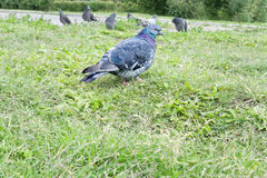 Pájaro en la hierba Imagenes de archivo