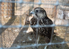 Pájaro en la jaula Fotos de archivo libres de regalías