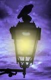 Pájaro en la lámpara de calle Foto de archivo libre de regalías