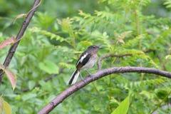 Pájaro en la lluvia, árboles verdes Fotografía de archivo