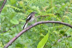 Pájaro en la lluvia, árboles verdes Imágenes de archivo libres de regalías