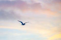 Pájaro en la luz de la puesta del sol fotografía de archivo