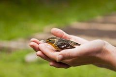 Pájaro en la mano Imagen de archivo libre de regalías