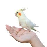 Pájaro en la mano Imagen de archivo