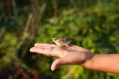 Pájaro en la mano Fotos de archivo libres de regalías