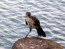 Pájaro en la orilla del agua Fotos de archivo