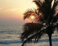 Pájaro en la palma en la puesta del sol del océano Foto de archivo