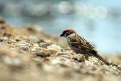 Pájaro en la playa Imagen de archivo libre de regalías