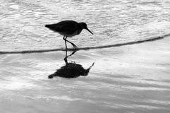 Pájaro en la playa Foto de archivo libre de regalías