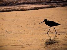 Pájaro en la puesta del sol Fotos de archivo libres de regalías