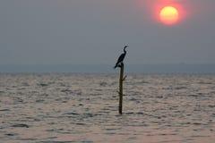 Pájaro en la puesta del sol Foto de archivo